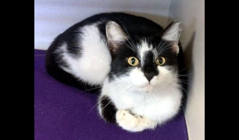 Montgomery County Animal Care and Control - Rocky