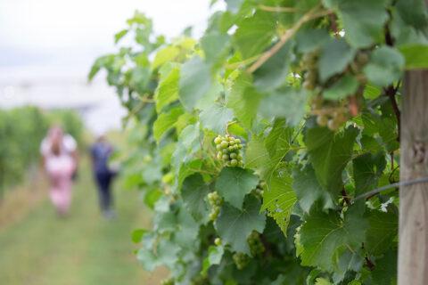 Beachaven Winery. (Visit Clarksville)