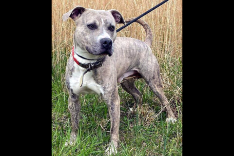 Companion Pet Rescue of Middle Tennessee - Atlas
