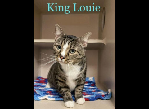 Montgomery County Animal Care and Control - King Louie