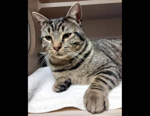 Montgomery County Animal Care and Control- Nansen