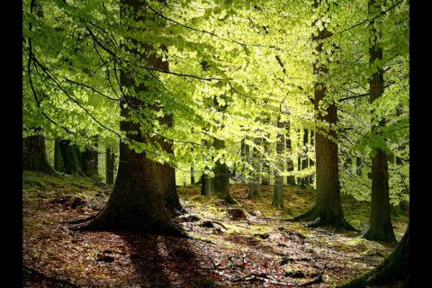 Tropical Forest. (Malene Thyssen/CC BY-SA 3.0)