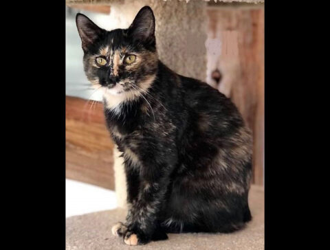 Dover Humane Society - Nell