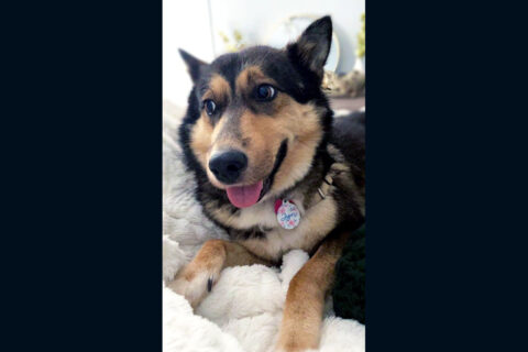 Humane Society of Clarksville-Montgomery County - Jyn
