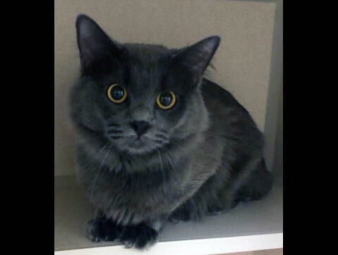Montgomery County Animal Care and Control - Darwin