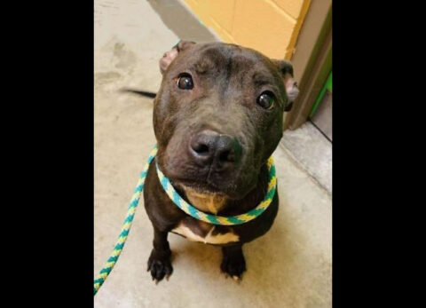 Montgomery County Animal Care and Control - Deacon