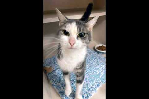 Montgomery County Animal Care and Control - Grove