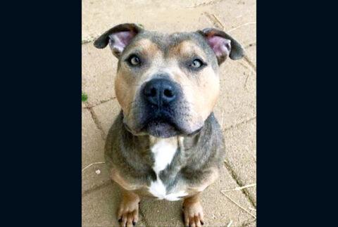 Montgomery County Animal Care and Control - Milo