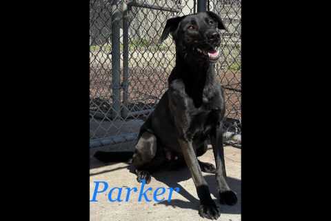 Montgomery County Animal Care and Control - Parker