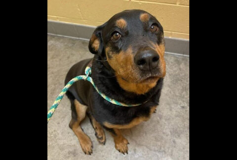 Zeena is available at Montgomery County Animal Care and Control.