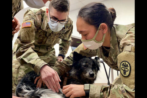 U.S. Army Veterinarian Capt. Neda Othman from the Fort Campbell Veterinary Center, shows Pfc. Matthew Murphy, assigned to BACH's department of emergency medicine, one method to find a pulse on a military working dog. BACH Soldiers recently participated in K9 Tactical Combat Casualty Care training which teaches non-veterinary first responders how to perform point-of-injury care to military working dogs in order to preserve life, limb or eyesight when a veterinarian or animal care specialist is not available. (U.S. Army photo by Maria Yager)