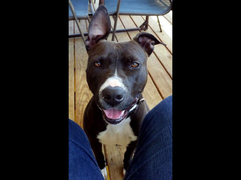 Companion Pet Rescue of Middle Tennessee - Ayer