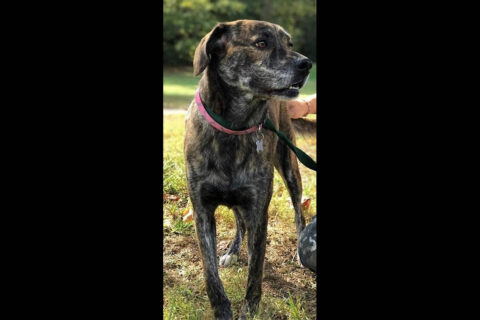 Humane Society of Clarksville-Montgomery County - Laila