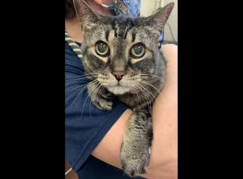 Montgomery County Animal Care and Control - Angel Kitty