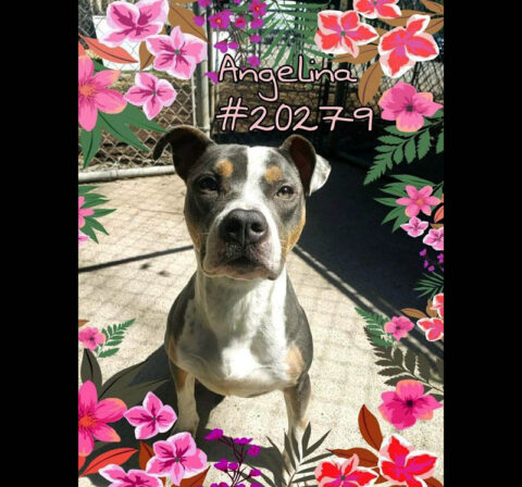 Montgomery County Animal Care and Control - Angelina
