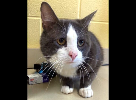 Montgomery County Animal Care and Control - Nix