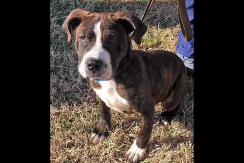 Drako is available at Stewart County Faithful Friends Animal Rescue