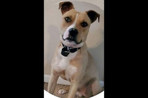 Two Ladies Caring Dog Rescue - Apollo