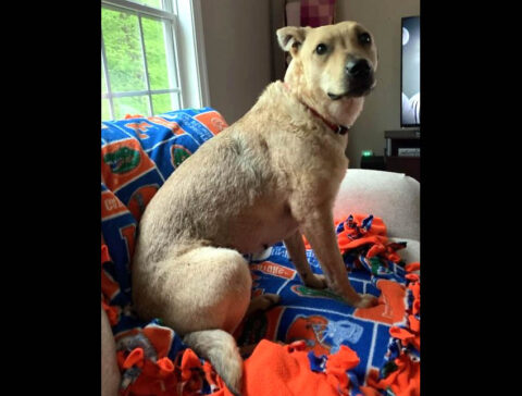 Companion Pet Rescue of Middle Tennessee - Cinnamon
