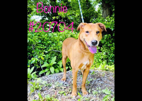 Montgomery County Animal Care and Control - Bonnie