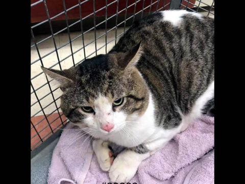 Montgomery County Animal Care and Control - Linc