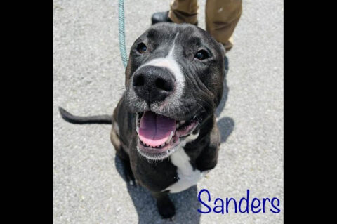 Sanders is available at Montgomery County Animal Care and Control