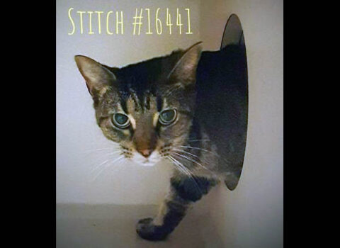Montgomery County Animal Care and Control - Stitch