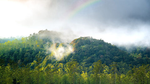 This image shows a forest giving off moisture into the air, or transpiring. When combined with moisture that evaporates from the land, both processes drive evapotranspiration, a key branch of the water cycle. As the climate warms, these processes are expected to intensify. (Acarapi / Adobe Stock)
