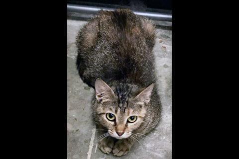 Cats Are Us - Trina