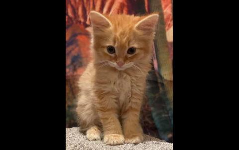 Dover Humane Society - Oliver