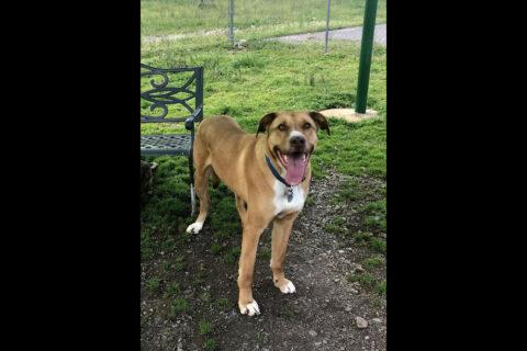 Humane Society of Clarksville-Montgomery County - Zavier