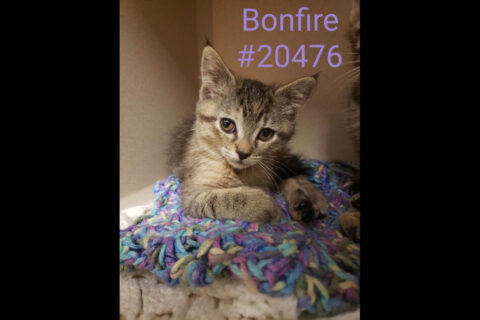 Montgomery County Animal Care and Control - Bonfire