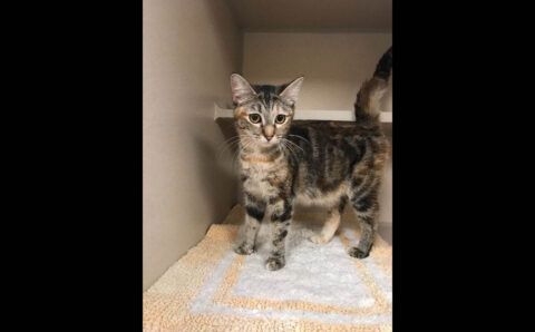 Montgomery County Animal Care and Control - Madeline