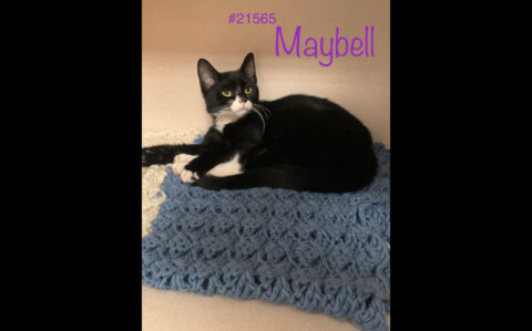 Montgomery County Animal Care and Control - Maybell