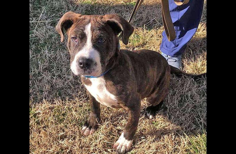Stewart County Faithful Friends Animal Rescue - Drako