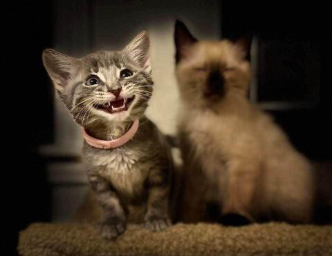 Kitten Shawna
