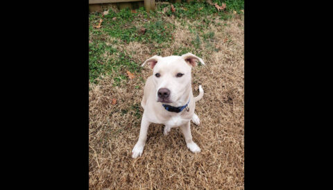 Companion Pet Rescue of Middle Tennessee - Indio