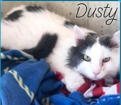 Dover County Humane Society - Dusty