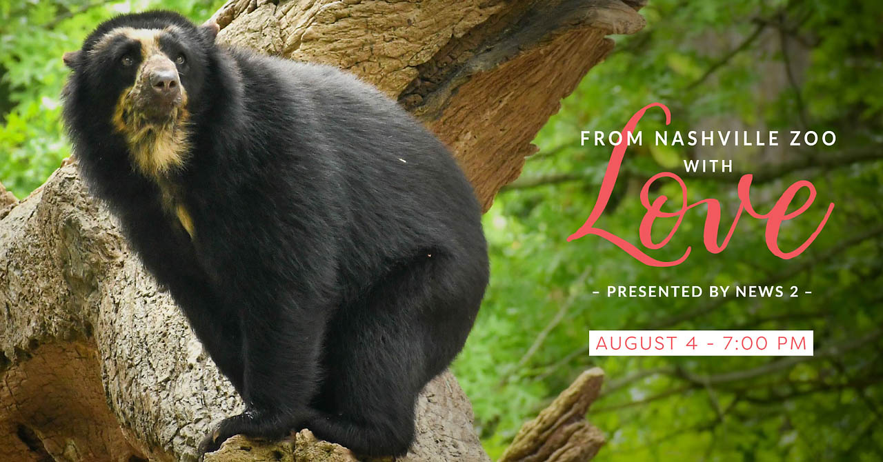From Nashville Zoo with Love presented by News 2 to be held August 4th, 2021.