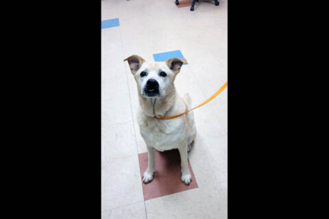 Montgomery County Animal Care and Control - Baby Girl