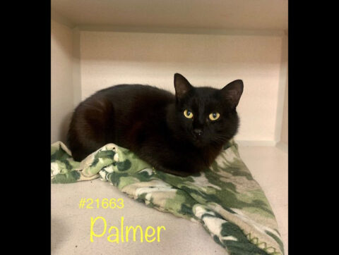 Montgomery County Animal Care and Control - Palmer
