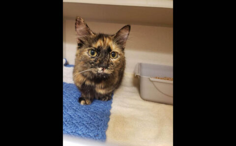 Montgomery County Animal Care and Control - Reeses