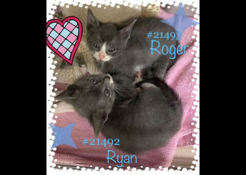 Montgomery County Animal Care and Control - Ryan & Roger
