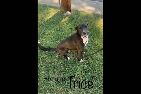 Montgomery County Animal Care and Control - Trice