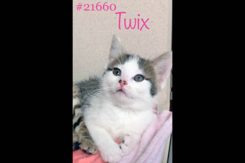 Montgomery County Animal Care and Control - Twix