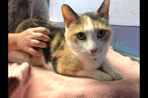 Abigale is available at Stewart County Faithful Friends Animal Rescue.