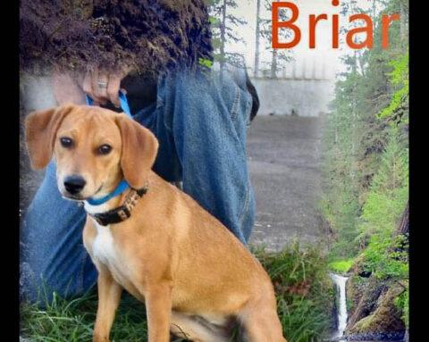 Stewart County Faithful Friends Animal Rescue - Briar