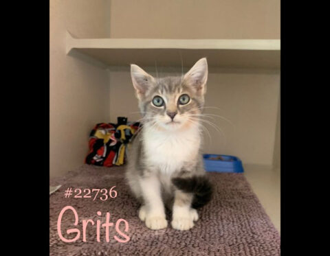 Montgomery County Animal Care and Control - Grits