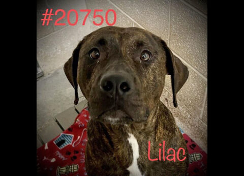 Montgomery County Animal Care and Control - Lilac