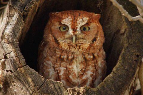 Owl. (Deb Campbell)